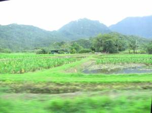 farming on Kauai